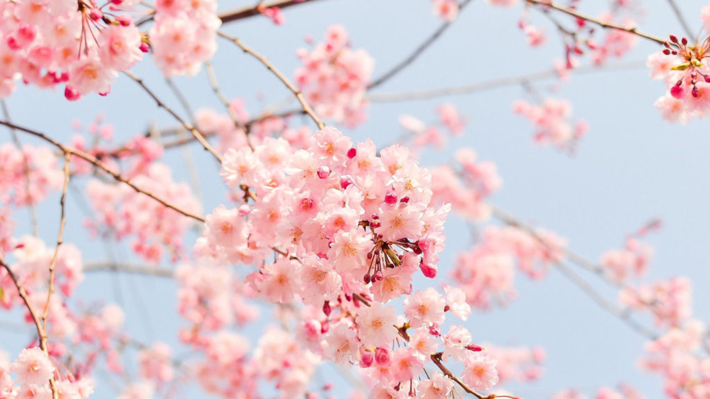 春望 (봄이 그리워) 두보